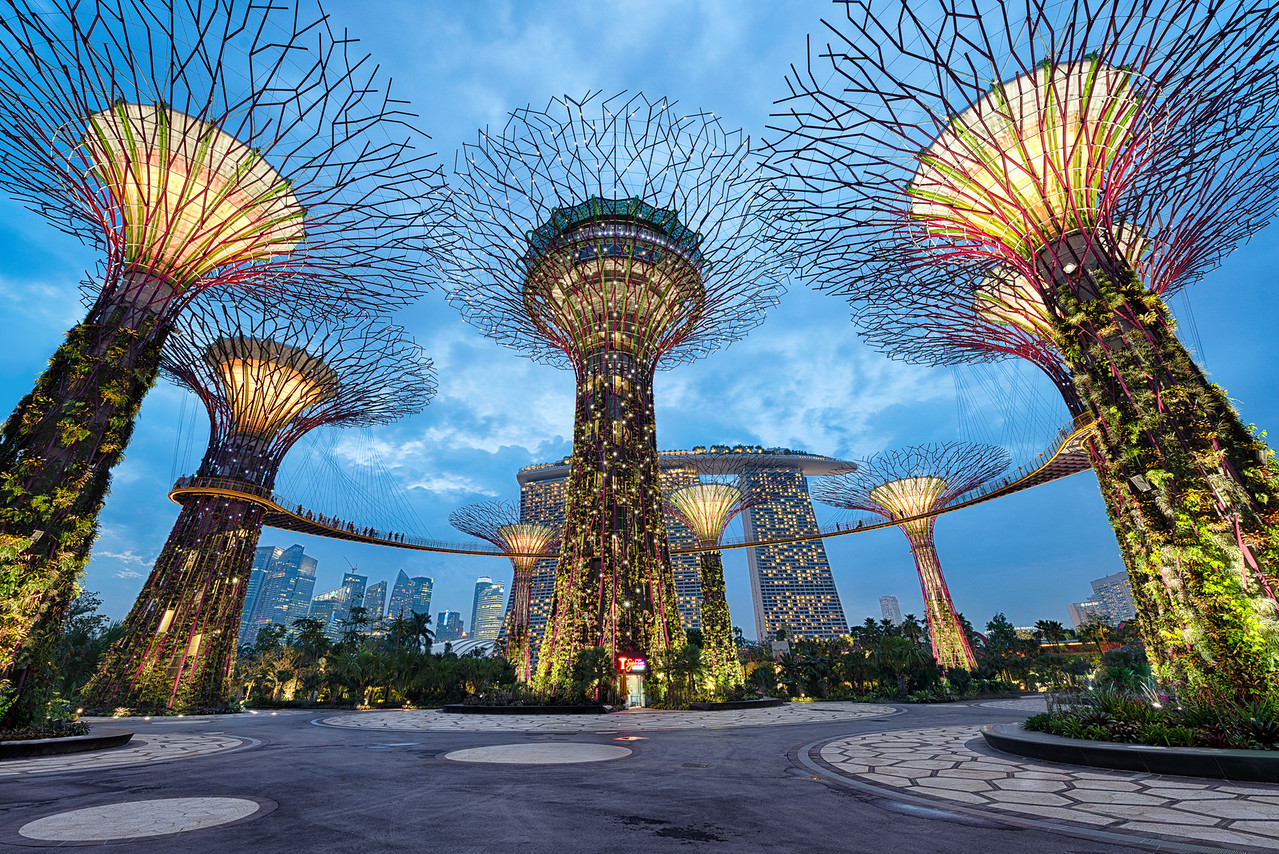 At night, the Supertress come alive with a dazzling display of light in Singapore.