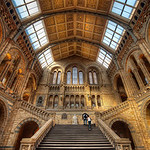 Natural History Too - (London, England)