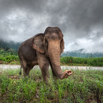 Curiosity - (Elephant Nature Park, Thailand)